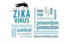 keeping out the mosquitos that carry ZIKA?? .. are the window screens? WHAT DO YOU THINK?